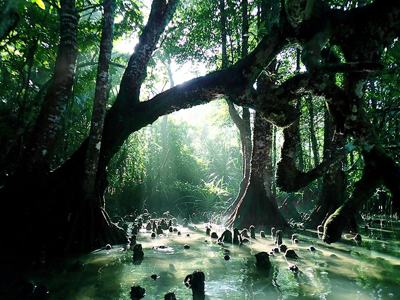 ジャングルのこもれび