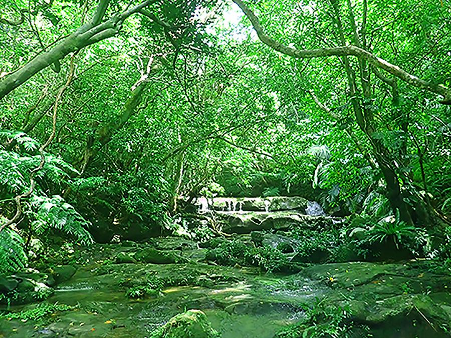 西表島 マングローブカヤック半日ツアー写真